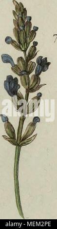 . Dictionnaire pittoresque d'histoire naturelle et des phénomènes de la nature . - Stock Photo