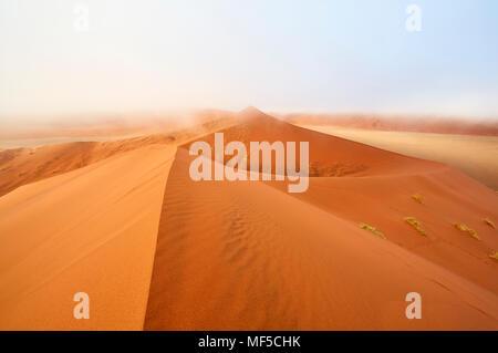 Namibia, Namib Desert, Sossusvlei, Namib-Naukluft National Park, Dune 45 and morning fog - Stock Photo