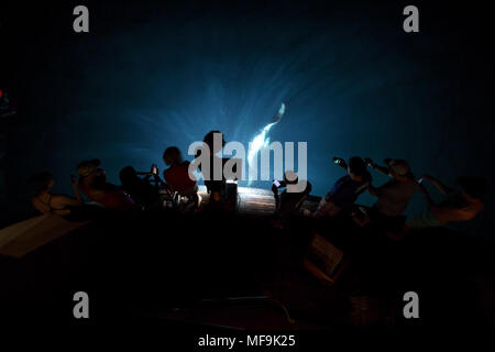 Group of people watch a manta ray swim near surface behind boat to eat plankton at night - Stock Photo