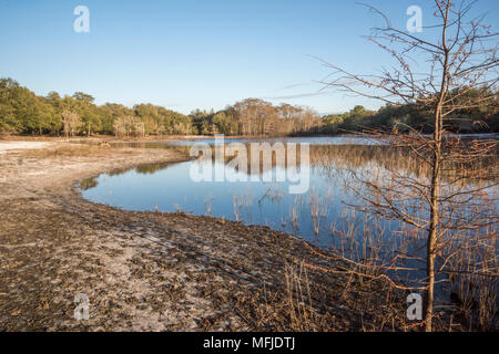 Indian Lake, Silver River Springs Forest - Stock Photo