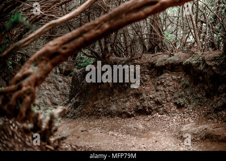 Girdling root is a common problem of trees in urban landscapes. - Stock Photo