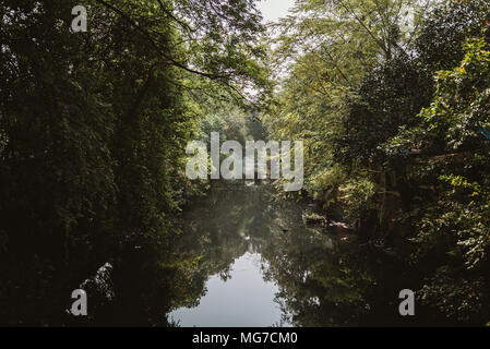 trees hang over a quiet stream brook river in Goa, India - Stock Photo