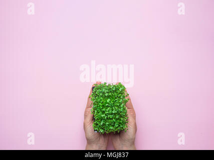 Young Caucasian Woman Holding in Hand Pot with Fresh Green Sprouts of Water Cress on Pastel Pink Background. Gardening Healthy Plant Based Diet Food G - Stock Photo