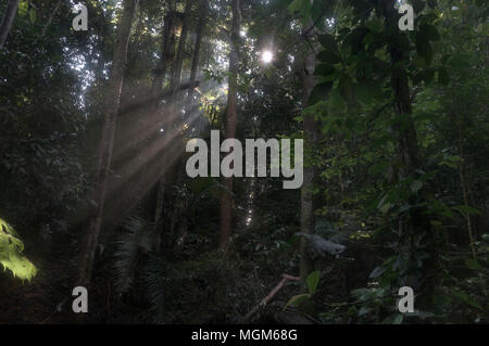 Early Morning Light Passing Through Rain Forest Foliage - Stock Photo