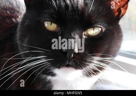 Cat Close-up - Stock Photo