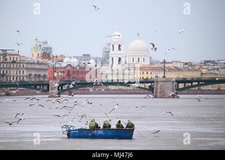 St Petersburg, Russia. 04th May, 2018. ST PETERSBURG, RUSSIA - MAY 4, 2018: RKL fish company [former V.I. Lenin Fishing Collective Farm] employees catching smelt in the Neva River. Peter Kovalev/TASS Credit: ITAR-TASS News Agency/Alamy Live News - Stock Photo