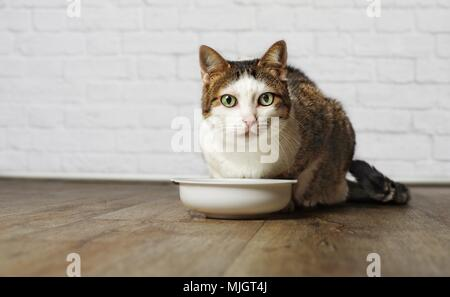Old cat sitting on a food bowl. - Stock Photo