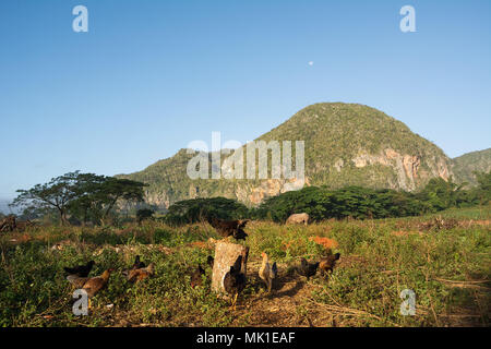 Panorama of the Vinales Valley with the Mogotes - Stock Photo