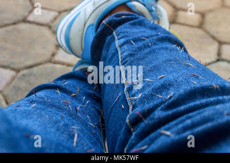 The Weed Seed Stuck on Blue Jean. Close Up of Weed Seed Stuck on Blue Jean. - Stock Photo