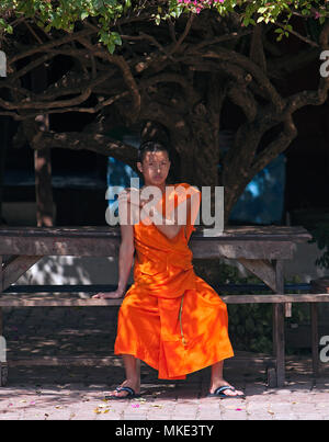 A Buddhist monk sits on a bech under a large shade tree in Luang Prabang, Laos. - Stock Photo
