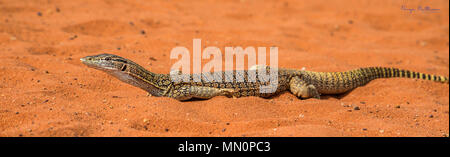 Goulds Goanna in Black and White - Stock Photo
