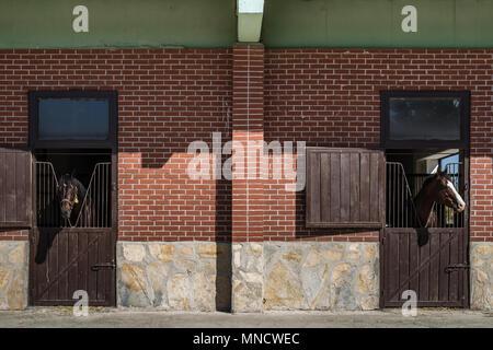 Brown horses looking over the stable door - Stock Photo