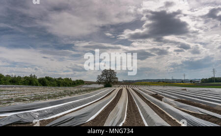 fields with asparagus beds covered in black foil and a wonderful hill and forest landscape behind - Stock Photo