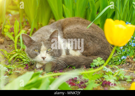 homeless cat sitting in the grass, walking in the Park, eating medicinal grass - Stock Photo
