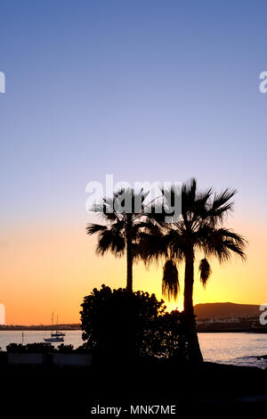 Two palm trees are silhouetted against the skyline as the sun sets over Playa Blanca in the south of Lanzarote. One of the Spanish canary Islands - Stock Photo
