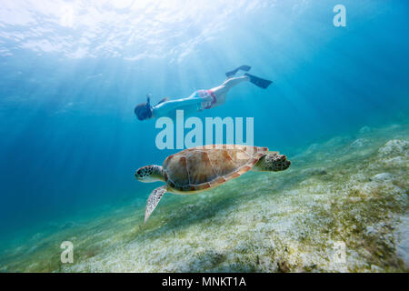 Underwater photo of young woman snorkeling and swimming with Hawksbill sea turtle - Stock Photo