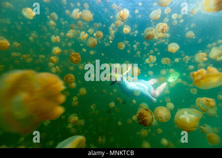 Underwater photo of woman diving with endemic golden jellyfish in lake at Palau. - Stock Photo