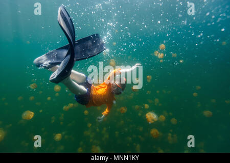 Underwater photo of tourist child snorkeling with endemic stingless jellyfish in lake at Palau. - Stock Photo