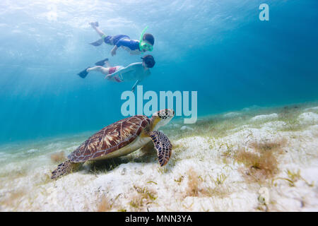 Underwater photo of family mother and son snorkeling and swimming with Hawksbill sea turtle - Stock Photo