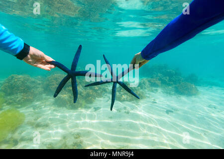 Underwater photo of couple holding blue star fish at tropical coral reef - Stock Photo