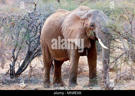 Close up of elephant in safari park - Stock Photo