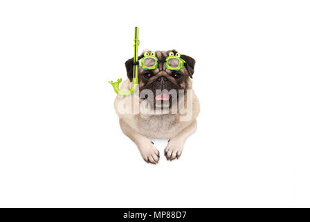 frolic smiling pug puppy dog with green snorkel and goggles, ready to dive, isolated , hanging with paws on white banner - Stock Photo