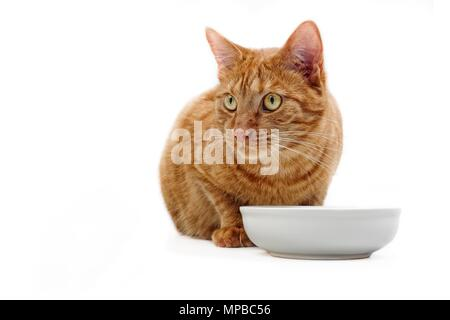 Ginger cat sitting beside a food bowl and looking sideways - Isloatede on white. - Stock Photo