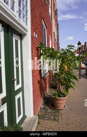 31st August 2017, Potsdam, GERMANY. Potted Display of 'Angels Trumpets' on the Mittel Str. Dutch Quarter, © Peter SPURRIER, - Stock Photo