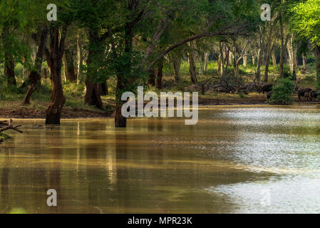 Pan in the Makuleke Contract Park of Northern Kruger South Africa - Stock Photo
