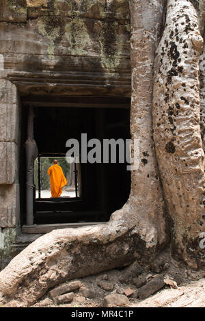 Monk, giant tree and roots in temple Ta Prom Angkor wat Cambodia landmark - Stock Photo