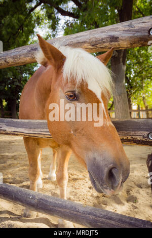 Horse looking to the camera over fence. - Stock Photo