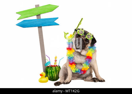 cute smart pug puppy dog sitting down with watermelon cocktail, wearing hawaiian flower garland, goggles and snorkel, next to wooden signpost with arr - Stock Photo