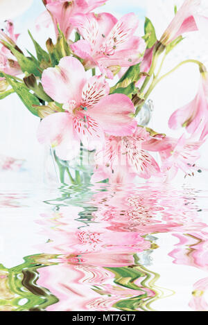 Bouquet of pink alstroemeria flowers with reflection in a water surface - Stock Photo