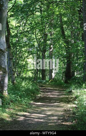 Footpath going through woods - Stock Photo
