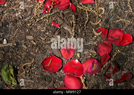 red flower petals on dirt and seeds and leaves - Stock Photo