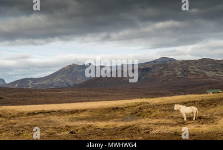 horse in the icelandic highlands - Stock Photo