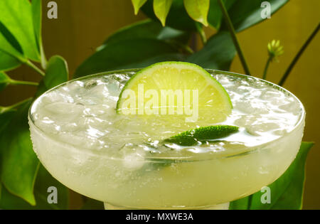 Top view of a delicious Margarita cocktail with ice, salt and a peace of lime. Green plants background.  Perfect for a nice warm summer. - Stock Photo