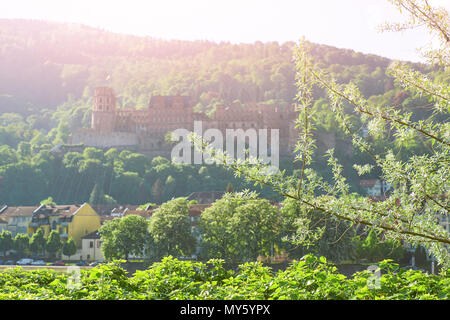 Romantic background with Heidelberg castle in the morning mist with springtime leaves in the foreground - Stock Photo