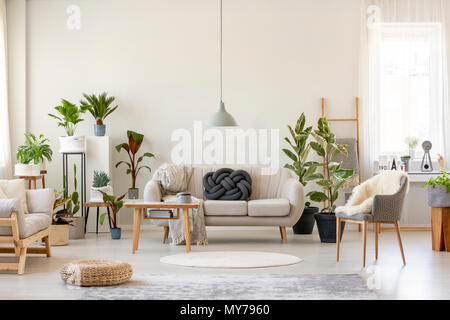 Real photo of a botanic living room interior full of plants with a grey couch standing behind a wooden table and under a lamp, with two chairs on the  - Stock Photo