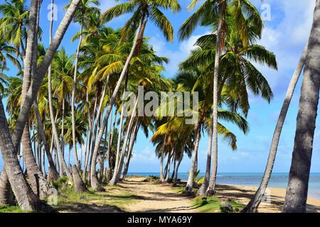 Playa bonita  beach on the Samana peninsula in Dominican Republic near the Las Terrenas town - Stock Photo