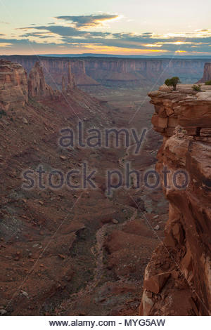 A lone tree on a cliff above a desert canyon at sunset. - Stock Photo