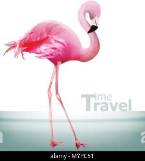 Flamingo card Vector. Beautiful pink bird on blue background - Stock Photo