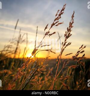 Batheaston, Bath, UK. 21st June, 2018. The sun seen through grasses blowing the breeze during the Summer Solstice sunrise on top of Little Solsbury Hill in Bath, UK Credit: Alex Stoneman & Billy-Jay Starling/StockimoNews/Alamy Live News - Stock Photo