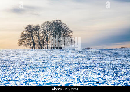 A clump of bare winter trees on the snow-covered Downs in Wiltshire. - Stock Photo