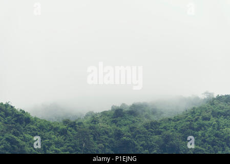 The tropical mountains forest in Thailand - Stock Photo