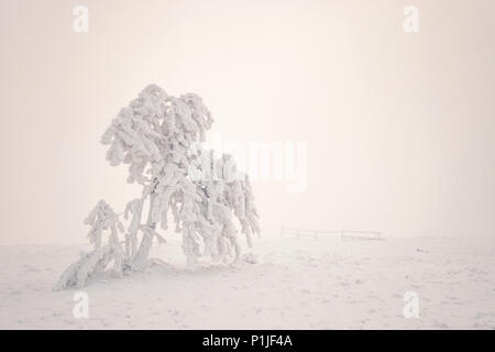 Hard rime on a tree surrounded by fog on the highest Rhoen peak named Wasserkuppe close to Gersfeld, district of Fulda, Hessia, Germany - Stock Photo