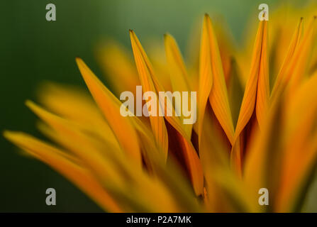 abstract closeup of a yellow flower - Stock Photo