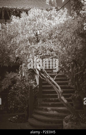 Brick stairway curving upward from a courtyard, surrounded by trees.  Dark, moody, image, with highlights on top of trees. - Stock Photo