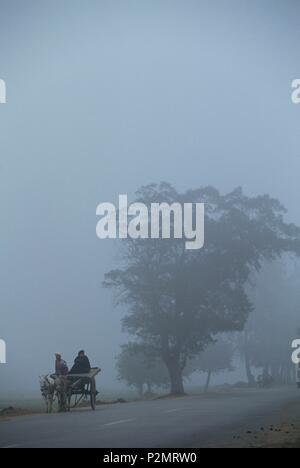 Egypt, on the Zerai road (between Alexandria and Cairo), in the heart of the Nile Delta, next to the city of Zifta, 1996, a couple goes on a car pulled by donkeys in the morning fog, mainly due to the smoke from the neighbouring sharcowl factory - Stock Photo
