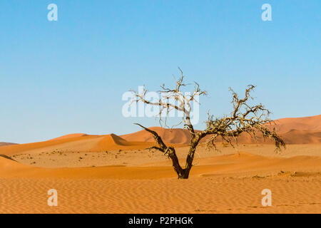 Dead tree with sand dune 45 in southern Namib Desert, Sossusvlei, Namib-Naukluft National Park, Hardap Region, Namibia - Stock Photo